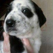 Adozione cuccioli - panda2