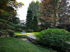 Bonsai, Golf Courses, Sidewalk, Bonsai Trees, Side Walkway, Sidewalks, Pavement, Walkways, String Garden