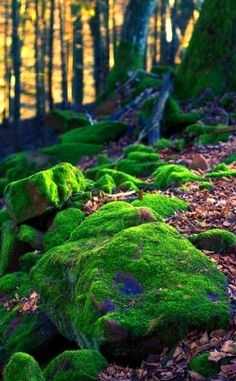 Moss-covered stones on a forest floor