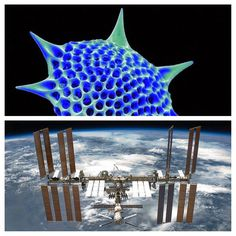 UFO SIGHTINGS DAILY: Plankton Found Living In Space On ISS Solar Panels...