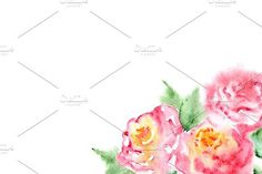 Watercolor pink rose composition. Watercolor Flowers