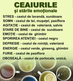 Salvia, Healthy, Medicine, Plant, Sage, Health
