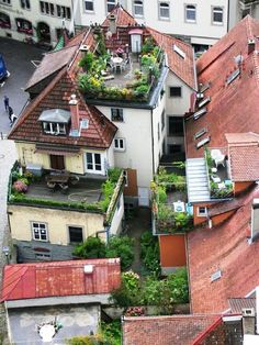 Garden on Roof ideas