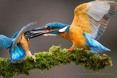Fight. By Nitins Jain.