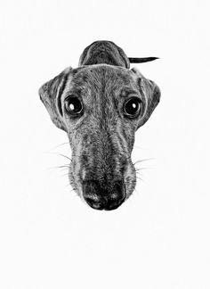 You gonna eat that all by yourself? Cuz, I can help. I iz very helpful doggie! #dachshund