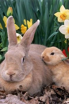 .Baby bunny and mom
