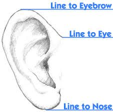 Image result for drawing ears