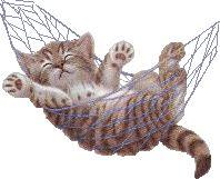 "Desgarga+gratis+los+mejores+gifs+animados+de+gatos.+Imágenes+animadas+de+gatos+y+más+gifs+animados+como+animales,+gracias,+risa+o+flores"""