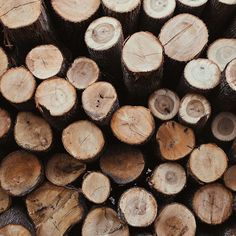 The Benefits of Woodsy Essential Oils