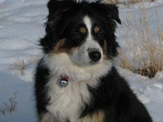 Kira in the snow!