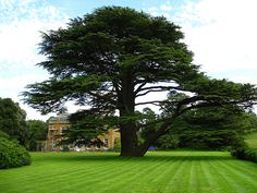 Farnborough Hall, via Flickr.