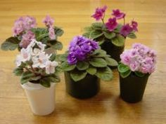 African Violets- my mom used to always have a few of these growing on her window sill when I was young. I want to try them in a terrarium.