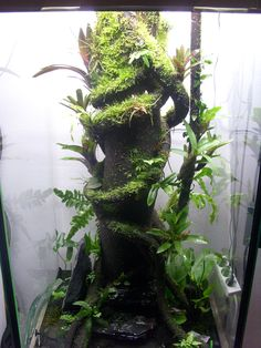 Frog #Paludarium 60x60x120cm with Water after 3 months, Trunk and Branches coated with #Hygrolon.