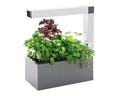 Jardin - Potager d'intérieur HERBIE et Kit prêt-à-pousser Basilic, gris - 40*19