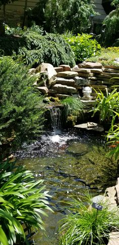 Beautiful plantings around  a rock waterfall