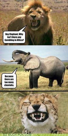 animal humor :)