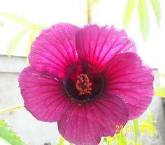 Asi culmina mayo! | Cuidar de tus plantas es facilisimo.com