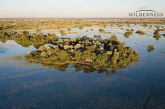 Jacana Camp in the Okavango Delta - the inundation has arrived. To find the source of the inflow, read this amazing personal account by Map Ives http://www.we-are-wilderness.com/2012/06/05/delving-deep-into-the-delta-map-ives/