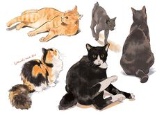 Warrior Cats, Animal Sketches, Animal Drawings, Cat Reference, Nature Sketch, Animation, Cat Drawing, Cat Art, Art Inspo