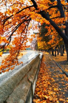 Autumn magic ♡