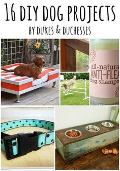16 DIY Dog Projects