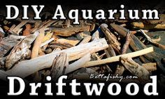 How To Make Your Own DIY Aquarium Driftwood One thing that I've never really grown out of is the terrible habit of walking on the beach looking for pretty things to pick up and bring home. Doesn't really matter if it's broken up pieces of sea glass or an interesting seashell, ... www.bettafishy.com