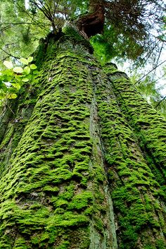 Moss Cover by Out of Vancouver on Flickr.