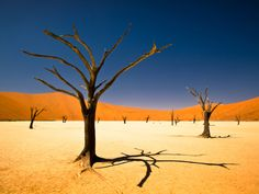 This winning entry in the youth environment section of the Sony world photography awards was taken by a 17-year-old South African, Bernard Pieterse, deep in the Namib desert  Photograph: Bernard Pieterse, Sony World Photography Awards 2012
