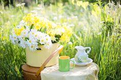 Jeśli chcesz wzmocnić efekty starań o szczupłą sylwetkę, posiłek popijaj zieloną herbatą. Ma ona bowiem właściwości odchudzające. Więcej na ten temat w najnowszym wpisie... https://oliwka24.pl/czy-herbata-zielona-wspomaga-odchudzanie/