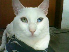 my precious kitty
