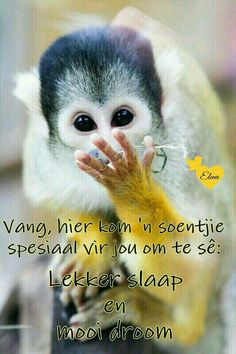 Good Night Messages, Good Night Quotes, Morning Messages, Good Night Sleep Tight, Afrikaanse Quotes, Goeie Nag, Night Wishes, Special Quotes, Good Morning