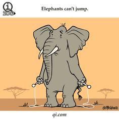 Elefantes não sabem pular .