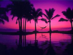 Palm trees and hammock at sunset via www.Facebook.com/PurpleIsWho
