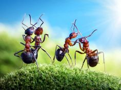 These are by a Russian man, Andrey Pavlov, hez a photography buff and ants, and for years unites these two passions, bringing fantastic results! He photographed these little workers in their daily tasks, and their interaction with environments that he creates, resulting in stunning images...