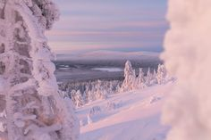 Our Last Night, The Eighth Day, Arctic Circle, Pine Forest, Finland, Winter Wonderland, Wilderness, Remote, Tourism