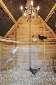 chickens.jpg - traditional - garage and shed - Lindsay von Hagel(Chicken Backyard Funny)