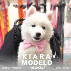 Wawaw tienda de ropa accesorios juguetes snacks medallas y placas para mascotas perros y gatos en Bogotá Medellín y todo Colombia. www.wawaw.co