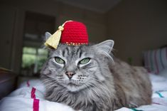 Fez Hat For A Cat
