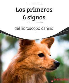 Los primeros 6 signos del horóscopo canino  ¿Sabías que existe un horóscopo canino? Pues sí. Según la fecha en la que haya nacido tu perro tendrá una personalidad o unas cualidades diferentes a otros. #horóscopo #canino #fechas #alimentación