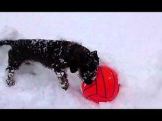 Isa in de sneeuw