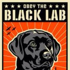 Two of my favorite things. Obey clothing and Black Labs