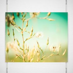 Free Wishes Photograph - Signed Fine Art Print - Pre-Flight Wishes, Dreamy, Green by Katya laRoche https://www.etsy.com/listing/114843445/free-wishes-photograph-signed-fine-art