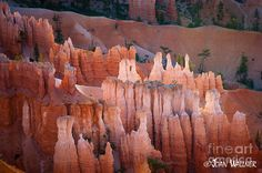 Hoodoos at Bryce Canyon National Park. Love the rich red colors! Canon Dslr Camera, Camera Lens, Bryce National Park, National Parks, Photography Tips, Bryce Canyon, Digital, Pictures, Colors