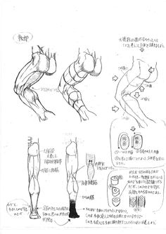 Anatomy_A_Strange_Guide_for_Artists_12.jpg (1240×1753)