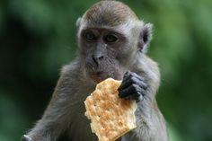 Monkeys at the Batu Caves - Malaysia