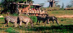 kilimanjaro safaris - Teen Disney: Animal Kingdom - www.wdwradio.com