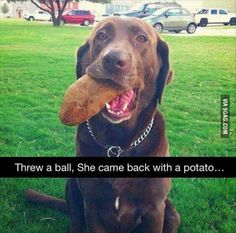 9gaggers would love this dog