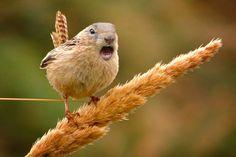 A mistura da natureza, os animais híbrido