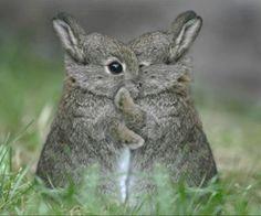 hugging-bunnies