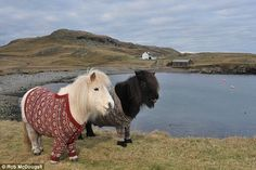 Stop What You Are Doing And Look At Ponies In Sweaters